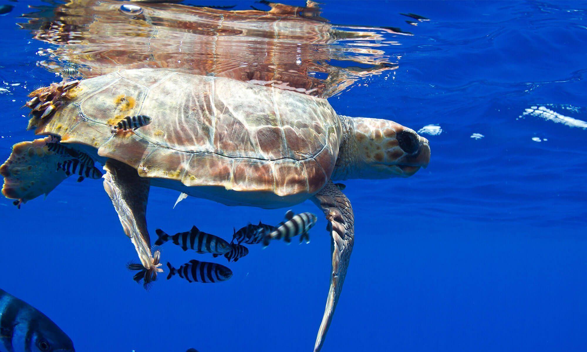 Schnorcheln mit Schildkröten und Delfinen